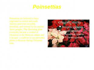 Poinsettias Poinsettias are believed to have originated in central and south Ame