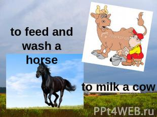 to feed and wash a horse to milk a cow