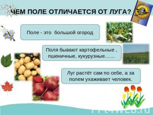 Поле и его обитатели презентация для начальной школы Поле это большой огород Поля бывают картофельные