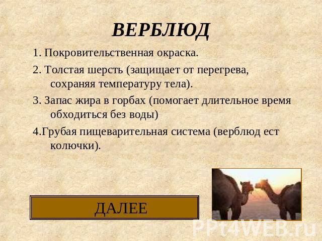 Пословицы поговорки про верблюдов