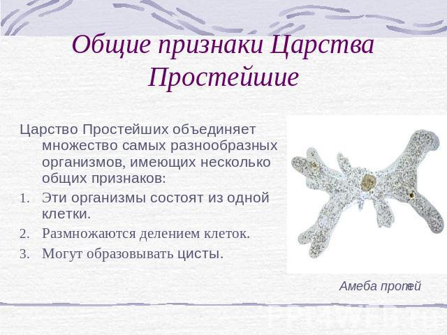 """Презентация на тему """"Царство Простейшие"""" - скачать бесплатно презентации по Биологии"""