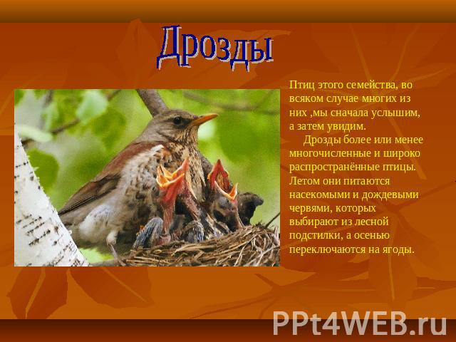 Реферат На Тему Птицы Леса Скачать Реферат На Тему Птицы Леса