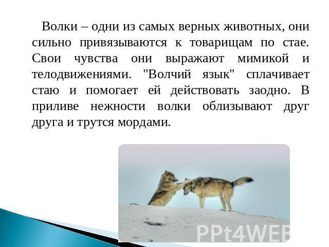 Московский волчьи законы тайги стр 50 сентябрь Бресте(Беларусь)