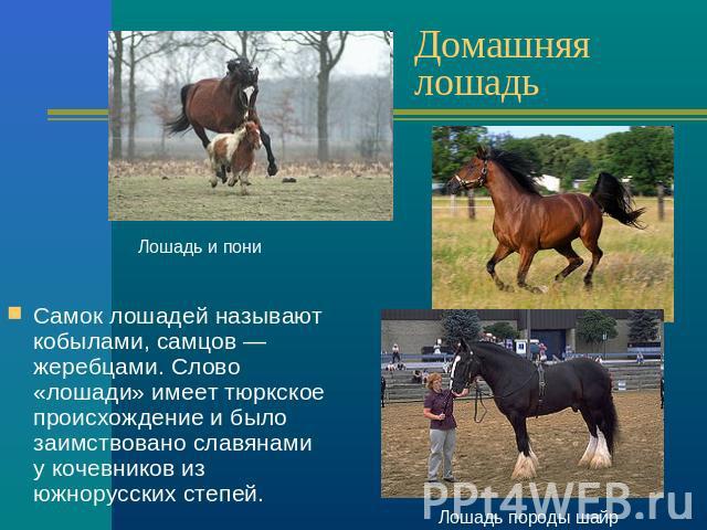Шаблоны для презентаций powerpoint скачать бесплатно лошади