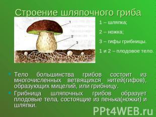 Презентация на тему Шляпочные грибы класс скачать бесплатно  слайда 3 Строение шляпочного гриба1 шляпка 2 ножка 3 гифы грибницы 1