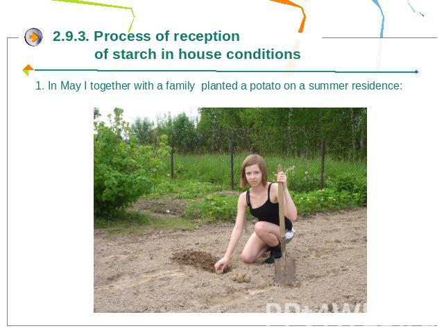 2.9.3. Process of reception of starch in house conditions1. In May I together with a family planted a potato on a summer residence:
