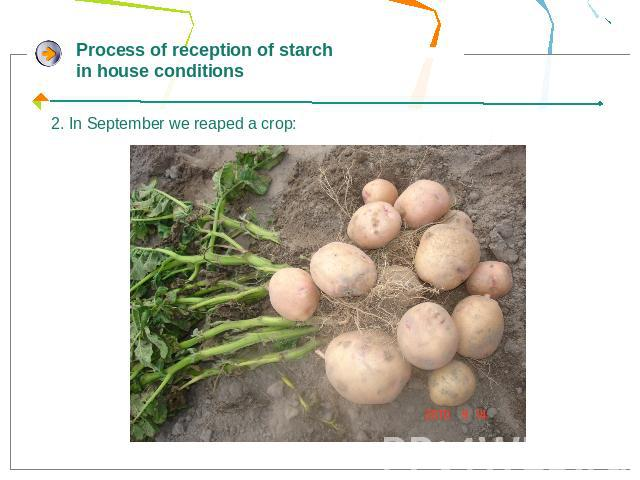 Process of reception of starch in house conditions2. In September we reaped a crop: