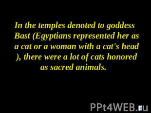 In the temples denoted to goddess Bast (Egyptians represented her as a cat or a