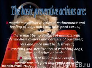 people must observe rules of maintenance and feeding of dogs and cats, take good