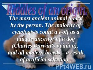 The most ancient animal tamed by the person. The majority of cynologists count a