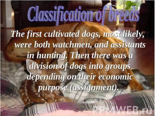 The first cultivated dogs, most likely, were both watchmen, and assistants in hu