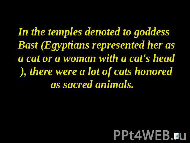 In the temples denoted to goddess Bast (Egyptians represented her as a cat or a woman with a cat's head), there were a lot of cats honored as sacred animals.