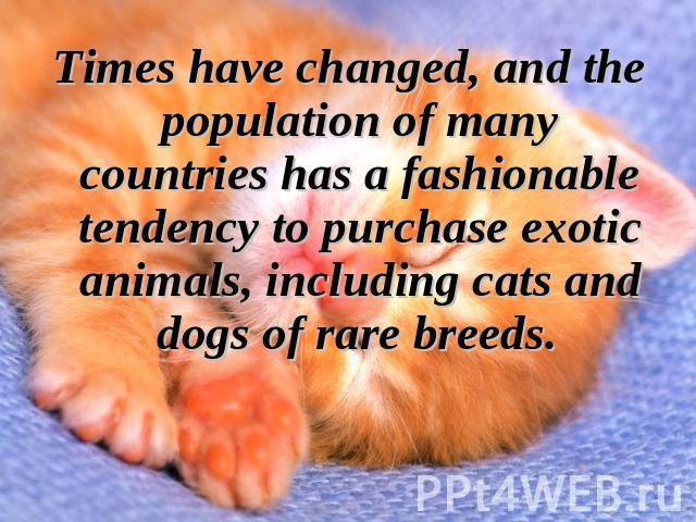 Times have changed, and the population of many countries has a fashionable tendency to purchase exotic animals, including cats and dogs of rare breeds.