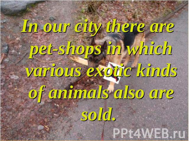 In our city there are pet-shops in which various exotic kinds of animals also are sold.