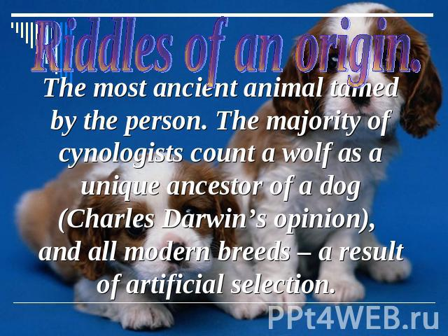 The most ancient animal tamed by the person. The majority of cynologists count a wolf as a unique ancestor of a dog (Charles Darwin's opinion), and all modern breeds – a result of artificial selection.