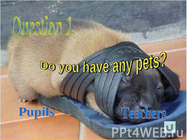 Question 1.Do you have any pets?