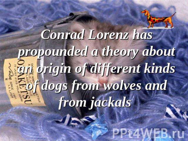 Conrad Lorenz has propounded a theory about an origin of different kinds of dogs from wolves and from jackals