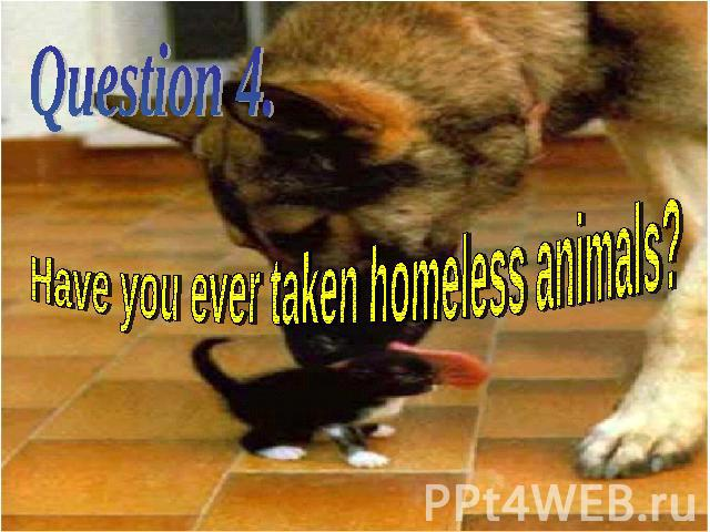 Have you ever taken homeless animals?