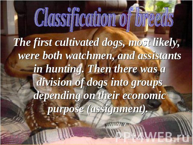 The first cultivated dogs, most likely, were both watchmen, and assistants in hunting. Then there was a division of dogs into groups depending on their economic purpose (assignment).