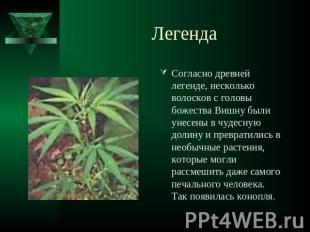 Презентация по теме марихуана что может грозить за выращивание конопли