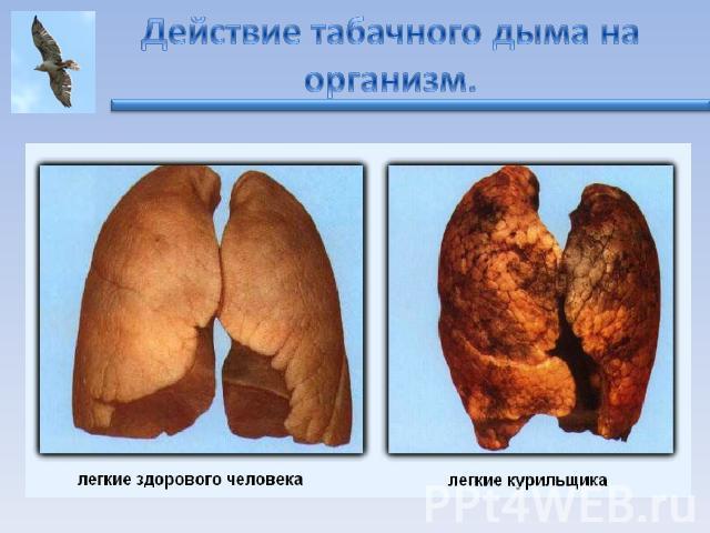 Влияние фреона на организм человека
