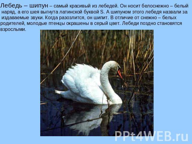 Книгу путь лебедя скачать