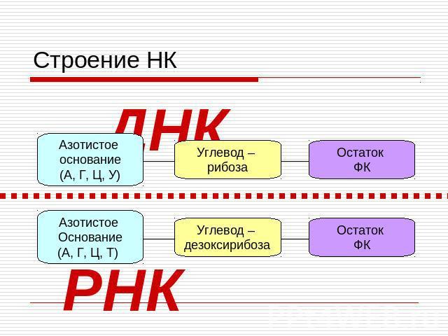 Доклад по биологии на тему нуклеиновые кислоты 5361