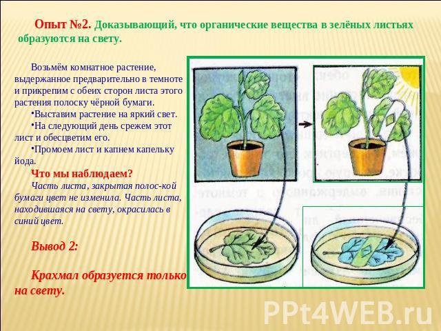 photsynthesis experiments