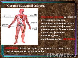 Органы иммунной системы. Иммунная система состоит из нескольких органов, способн