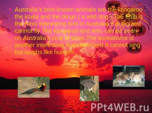 Australia's best-known animals are the kangaroo the koala and the dingo ( a wild