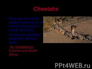 Cheetahs They are one of the fastest mammals in the world.( His speed is nearly