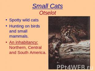 Small CatsOtselot Spotty wild catsHunting on birds and small mammals.An inhabita