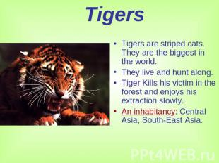 Tigers Tigers are striped cats. They are the biggest in the world.They live and