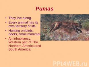 Pumas They live along.Every animal has its own territory of life.Hunting on bird