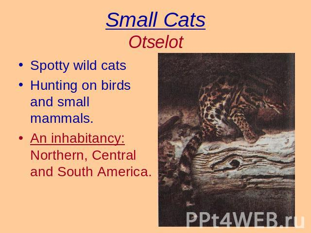 Small CatsOtselot Spotty wild catsHunting on birds and small mammals.An inhabitancy: Northern, Central and South America.