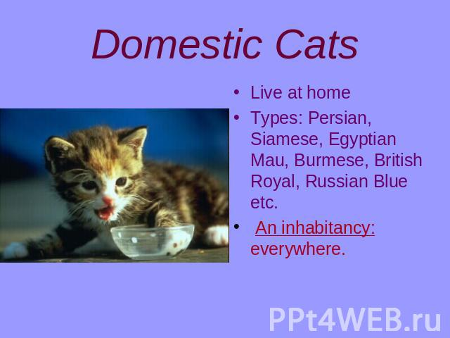 Domestic Cats Live at homeTypes: Persian, Siamese, Egyptian Mau, Burmese, British Royal, Russian Blue etc. An inhabitancy: everywhere.