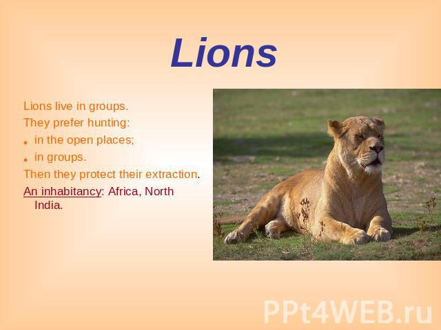 Lions Lions live in groups.They prefer hunting: in the open places;in groups.Then they protect their extraction.An inhabitancy: Africa, North India.