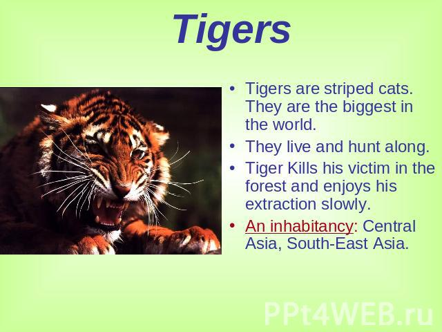 Tigers Tigers are striped cats. They are the biggest in the world.They live and hunt along.Tiger Kills his victim in the forest and enjoys his extraction slowly.An inhabitancy: Central Asia, South-East Asia.