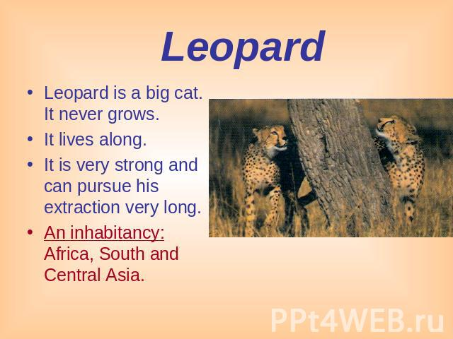 Leopard Leopard is a big cat. It never grows. It lives along.It is very strong and can pursue his extraction very long. An inhabitancy: Africa, South and Central Asia.