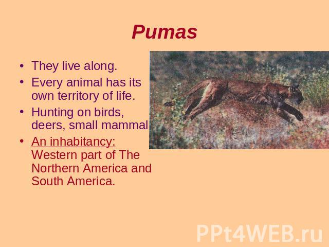 Pumas They live along.Every animal has its own territory of life.Hunting on birds, deers, small mammals.An inhabitancy: Western part of The Northern America and South America.