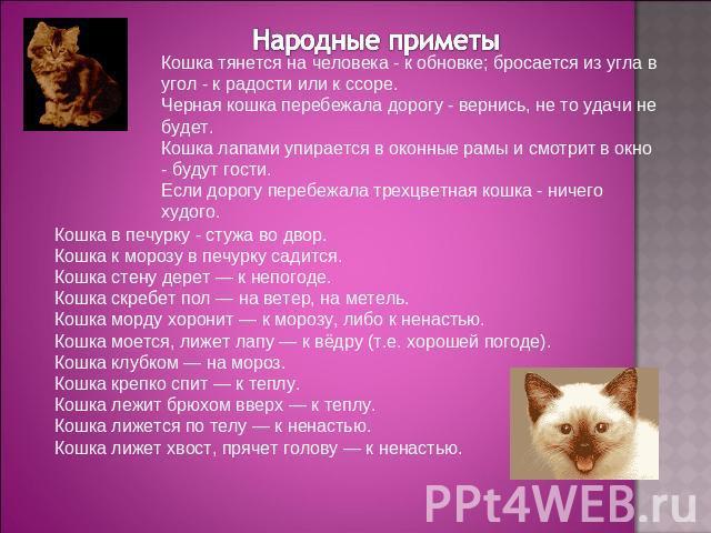 принимают беременная кошка пришла в дом приметы убила любовь, Что
