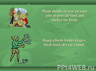 Plant shrubs or tree on your plot to provide food and shelter for birds. Hang a