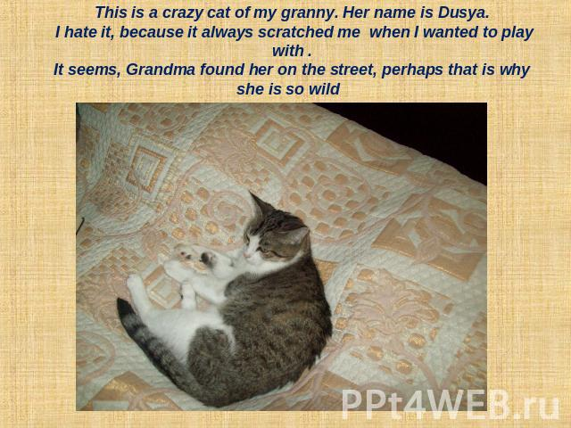 This is a crazy cat of my granny. Her name is Dusya. I hate it, because it always scratched me when I wanted to play with .It seems, Grandma found her on the street, perhaps that is why she is so wild