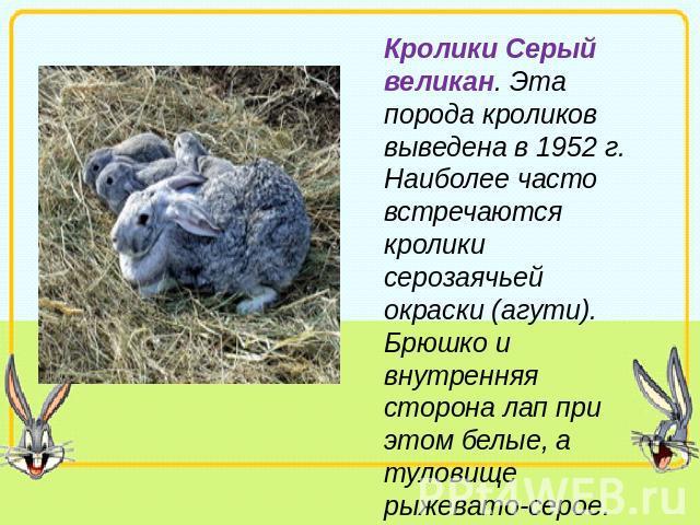 Реферат про домашних кроликов 681
