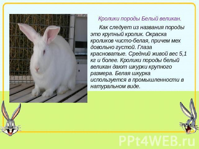 Реферат на тему кролик 6303