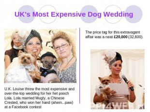 UK's Most Expensive Dog Wedding The price tag for this extravagant affair was a
