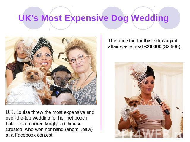 UK's Most Expensive Dog Wedding The price tag for this extravagant affair was a neat £20,000 (32,600). U.K. Louise threw the most expensive and over-the-top wedding for her het pooch Lola. Lola married Mugly, a Chinese Crested, who won her hand (ahe…