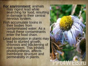 For environment: animals may ingest lead while searching for food, resulting in