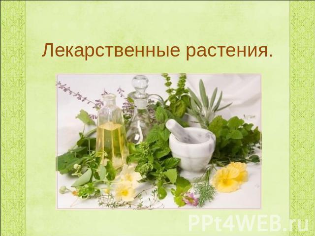 Лекарственные растения класс презентация для начальной школы Лекарственные растения