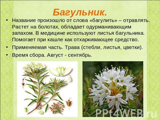 Лекарственные растения болот реферат 9703